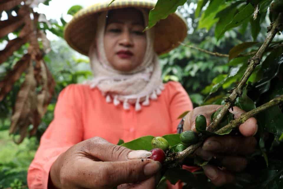 Java Mountain Coffee_social_enterprise