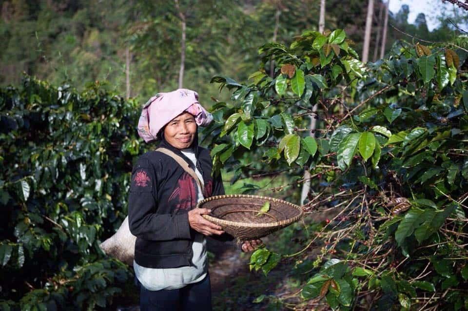 Java Mountain Coffee_socialimpactcoffee
