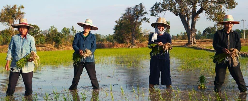 Siam Organic_socialimpact