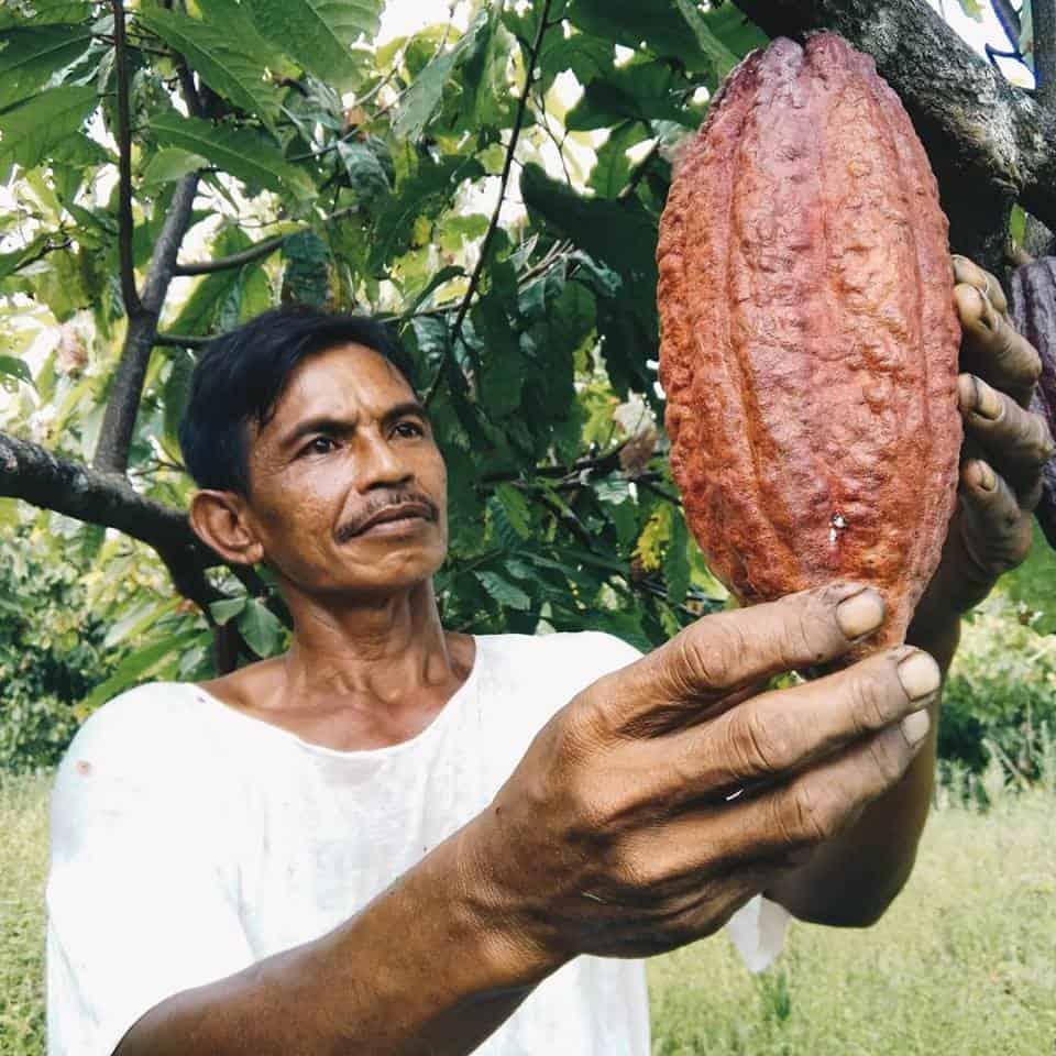 Taufik, Krakakoa's lead farmer in Tanjung Rejo