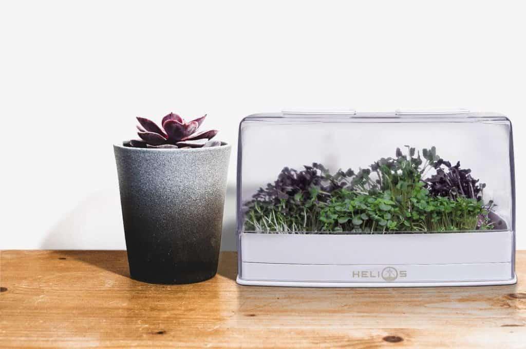 grofast_modern_planter_box_microgreens