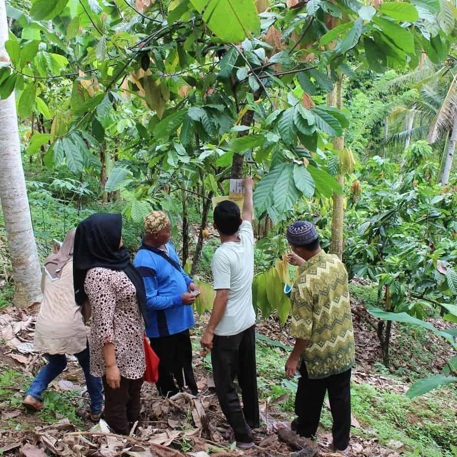 sustainable farming_chocoalte